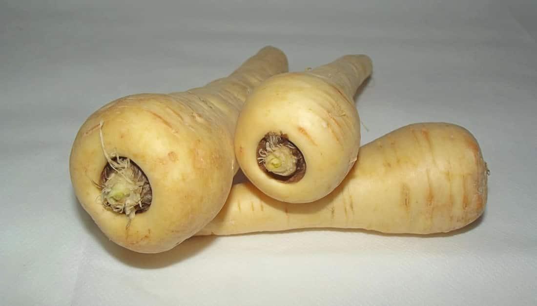 Pastinaca, un antica varietá vegetale