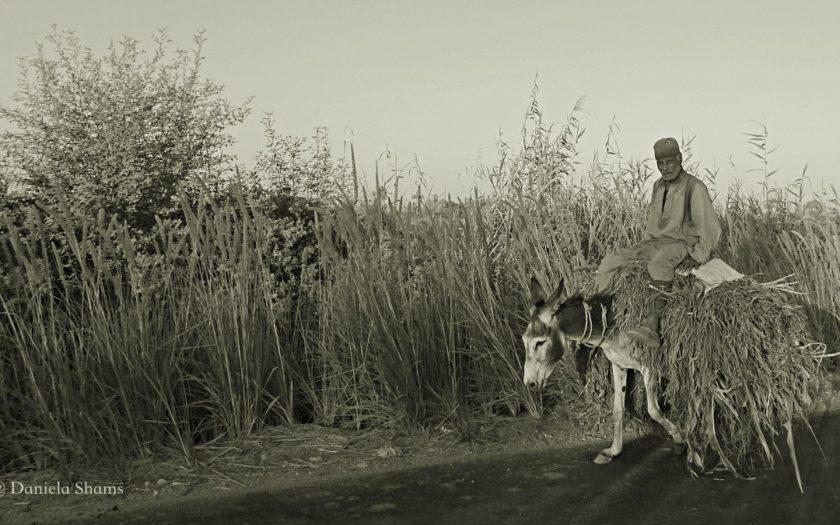 egitto, in campagna, Reportage, Daniela Shams